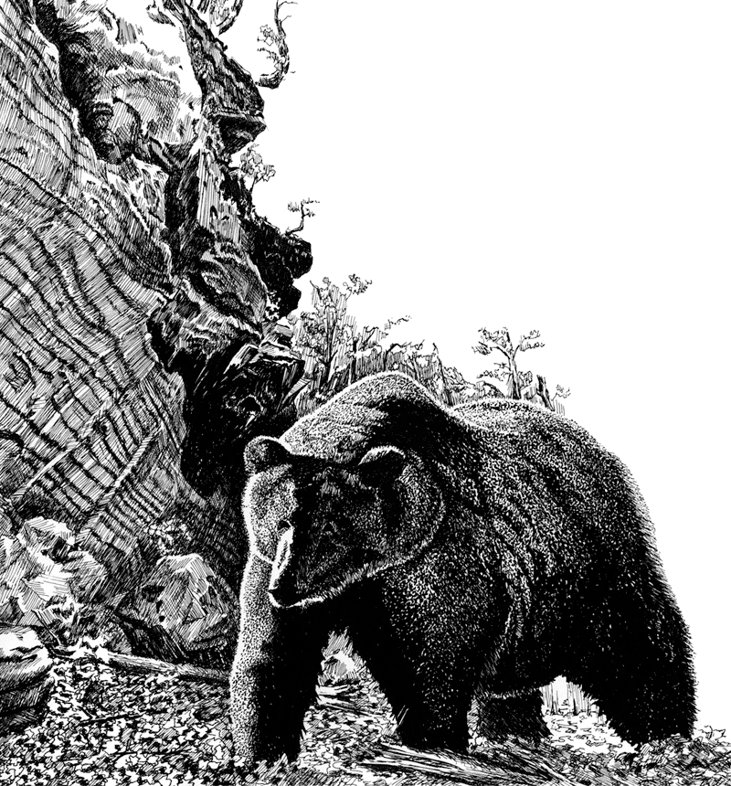 Black and white depiction of a bear