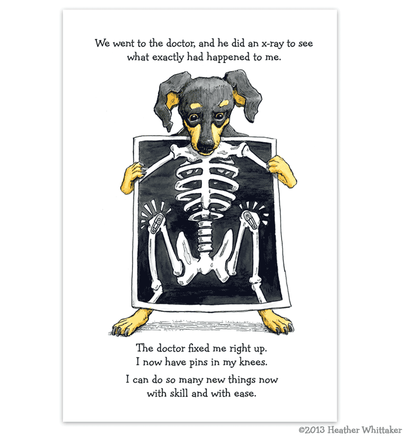 Book Illustration - Dog X-ray Illustration - Alberts Illustration