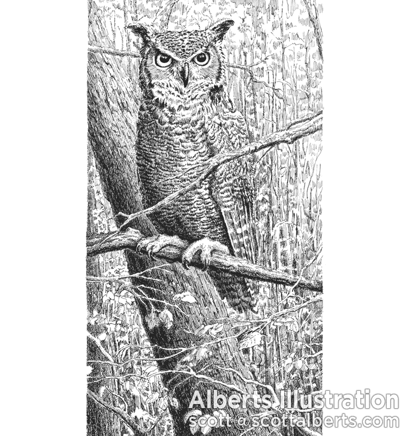 Pen and Ink Art - Owl
